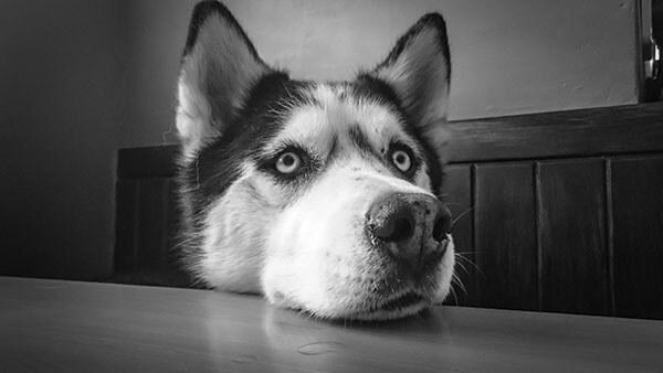 Persoon aait hond