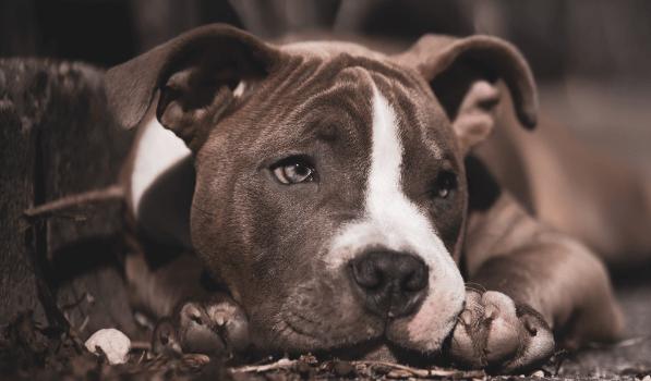 puppy liggend op de grond